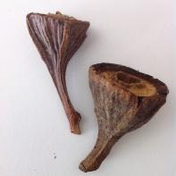 gum nut duo