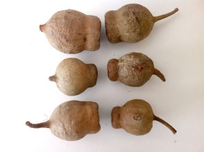 gum nut line up